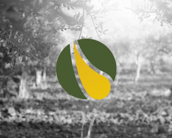 Logo design for a company dedicated to the buying and selling of olive oil